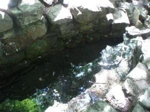 la fontaine de BARENTON autre lieu magique de la fôret de BROCELIANDE